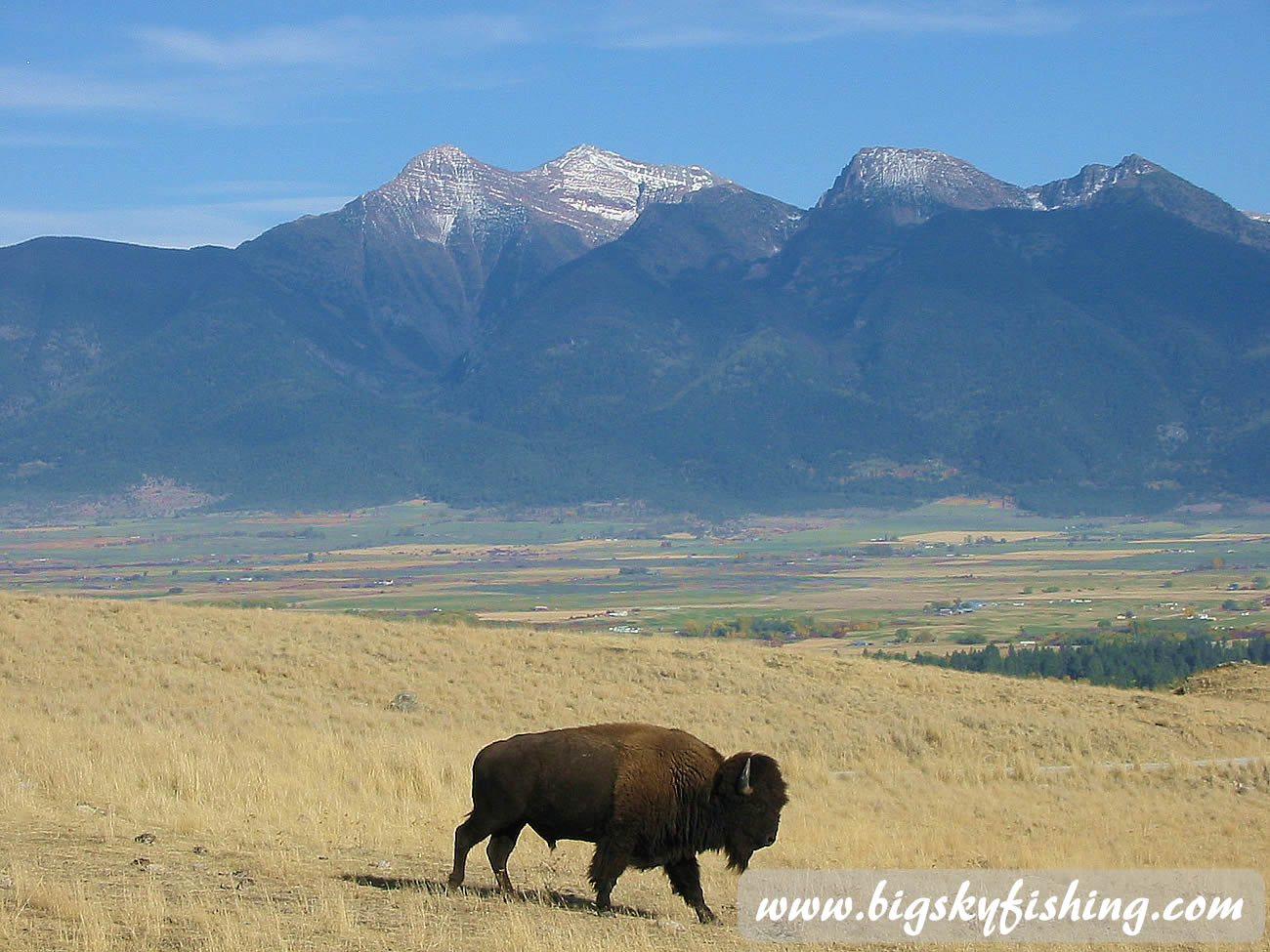 Bison Amp The Mission Mountains At The Natioinal Bison Range