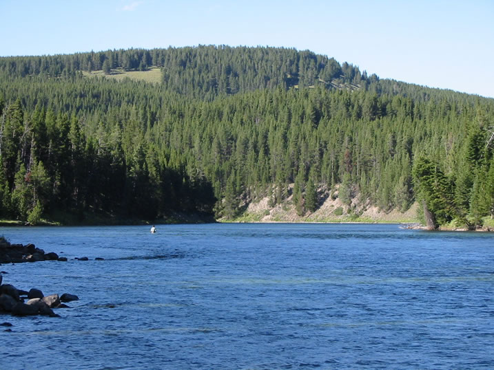 Fly fishing the yellowstone river in yellowstone national park for Yellowstone lake fishing