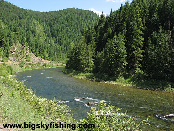 The st joe river in national forest lands photos of the for St joseph river fishing