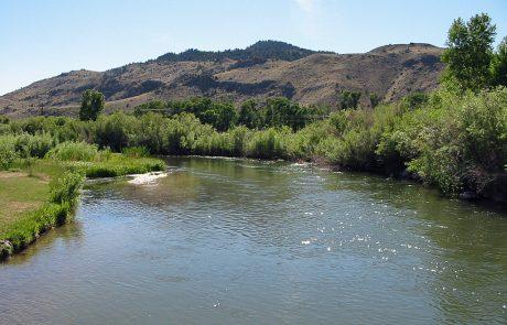 Bushy Banks along the Beaverhead River