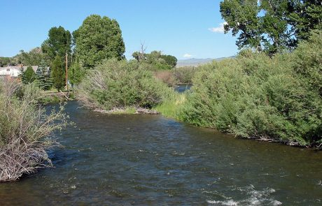 Bushy Banks Provide Good Structure for Trout