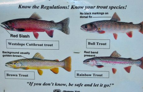 Know Your Trout Sign in the Blackfoot River Corridor
