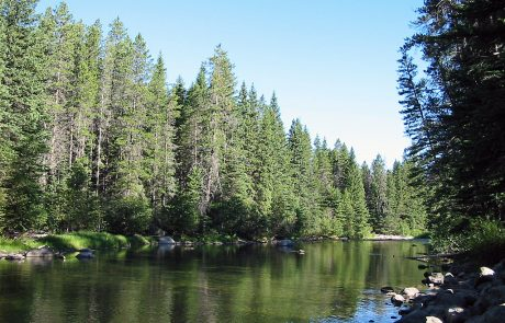 Thick Forests along the Upper Boulder River
