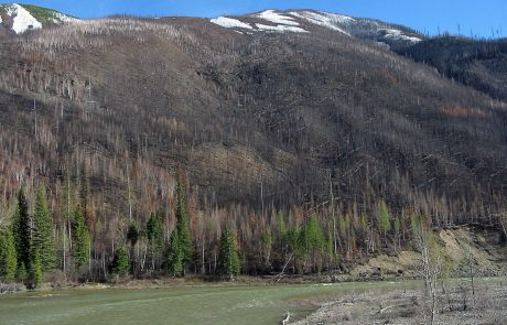 North Fork Flathead River flows through the burn scar of the Moose Fire